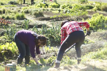 Volunteers transplant clover, photo by Olivia Szostek