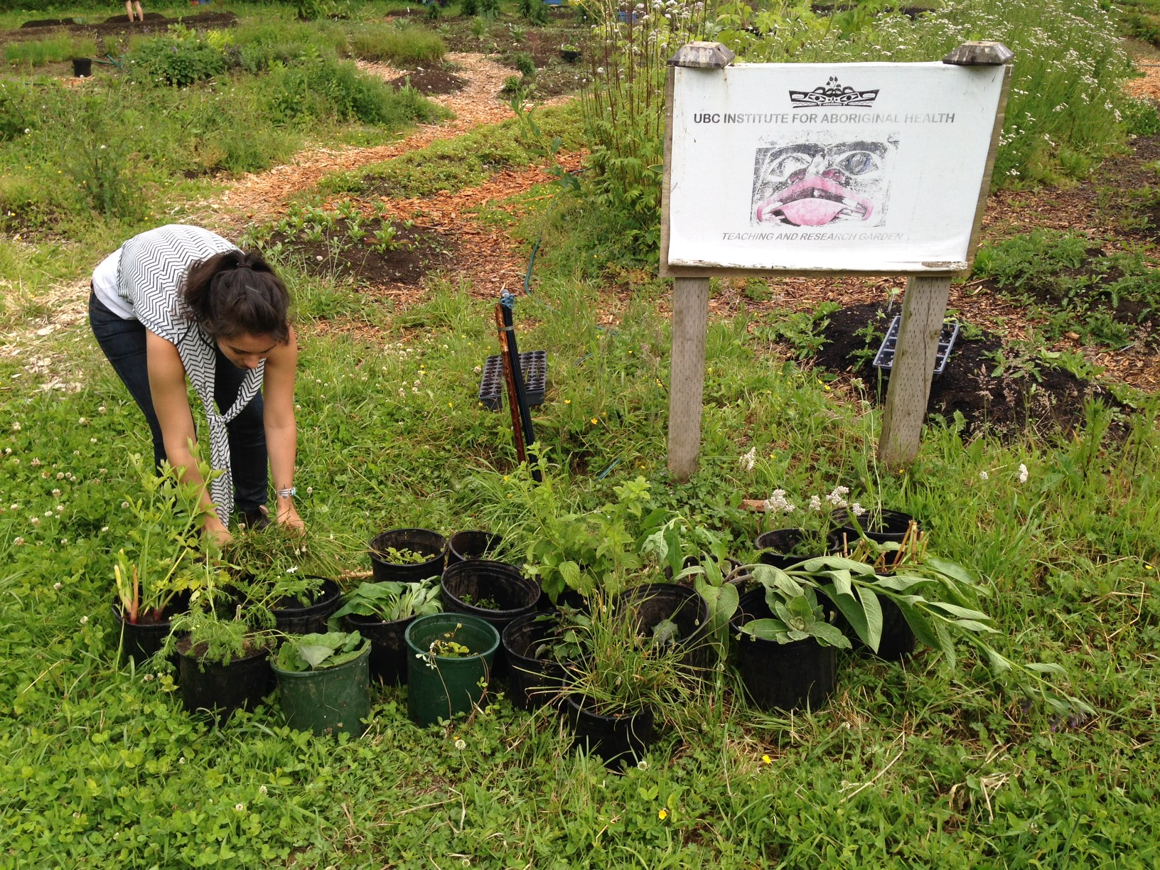 Preparing medicine plant donations for the Shíshálh First Nation with Intern Danette Jubinville, photo by Erica Baker