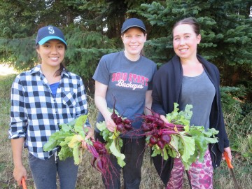 Volunteers and Jaylin (far right) harvest beets for the Feast Bowl in July