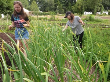 Kendall (left) helps harvest garlic scapes in the garden with a volunteer