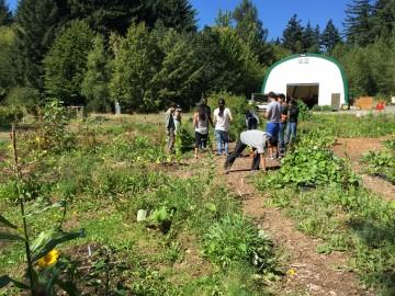 Helping volunteers in the garden